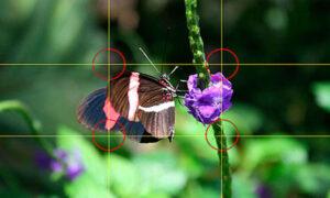 Read more about the article Gridlines Kamera, Arti Dan Fungsinya