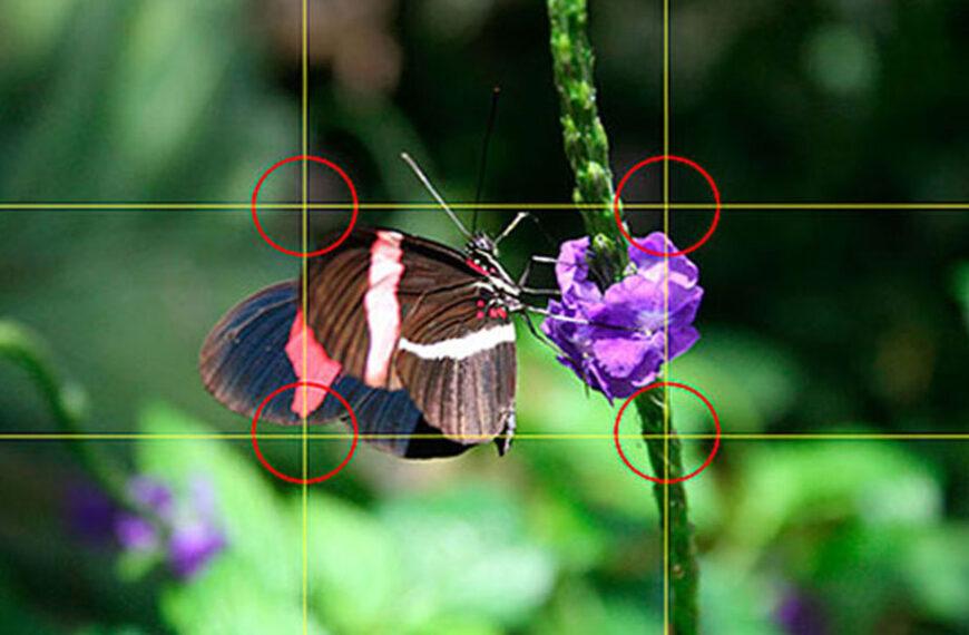 Gridlines Kamera, Arti Dan Fungsinya