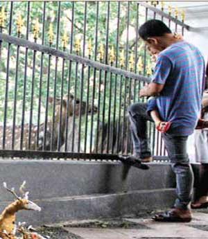 Memberi Makan Rusa di Istana Bogorver